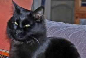 Disappearance alert Cat Male , 5 years Gujan-Mestras France