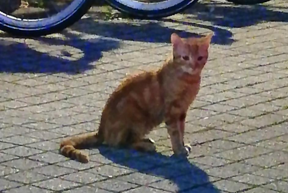 Discovery alert Cat miscegenation  Unknown , Between 7 and 9 months Besançon France