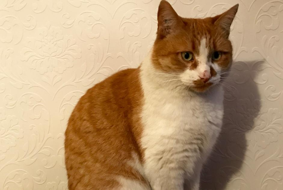 Disappearance alert Cat  Male , 7 years Nantes France