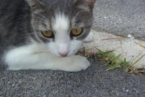 Discovery alert Cat Female Montpellier France