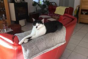 Disappearance alert Cat Female , 2 years Rennes France