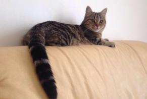 Disappearance alert Cat Female , 3 years Toulouse France