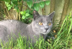 Disappearance alert Cat  Male , 2 years Coulomby France