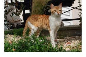 Disappearance alert Cat Male , 1 years Magny-le-Hongre France