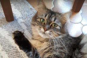 Disappearance alert Cat miscegenation  Female , 2 years Montailleur France