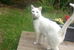 Disappearance alert Cat Female , 2 years Bègles France