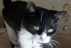 Disappearance alert Cat Male , 7 years Maisons-Alfort France