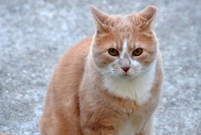 Disappearance alert Cat Male , 12 years Uzès France
