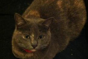 Disappearance alert Cat Female , 4 years La Madeleine France