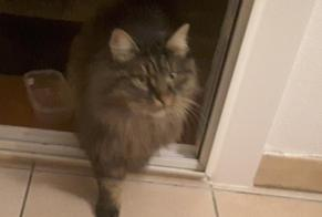 Discovery alert Cat Unknown , 1 year Varilhes France